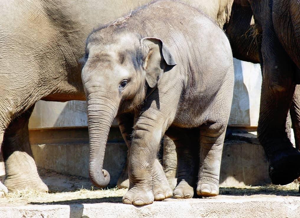 Gyereknap a Budapesti Állatkertben