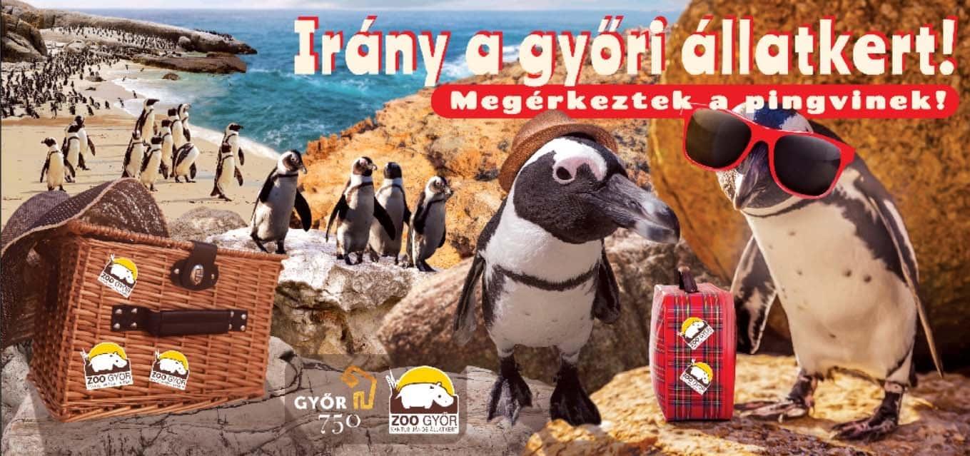 Gyereknap a Győri Állatkertben